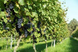 Wijngaard-Hof-van-Twente-Locaties-Boenders-Catering