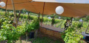 Wijngaard Hof van Twente - Boenders Catering - Locaties - wijngaarddiner